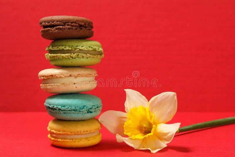 Tortas dulces de los macarons de diverso color con la flor amarilla del narciso en superficie texturizada roja foto de archivo libre de regalías