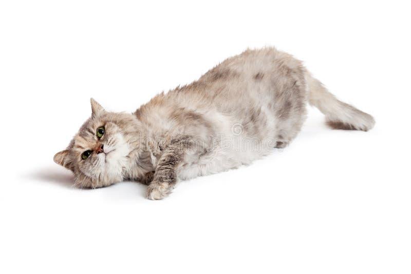 Tortie katt som lägger på sidan som ser upp arkivbild