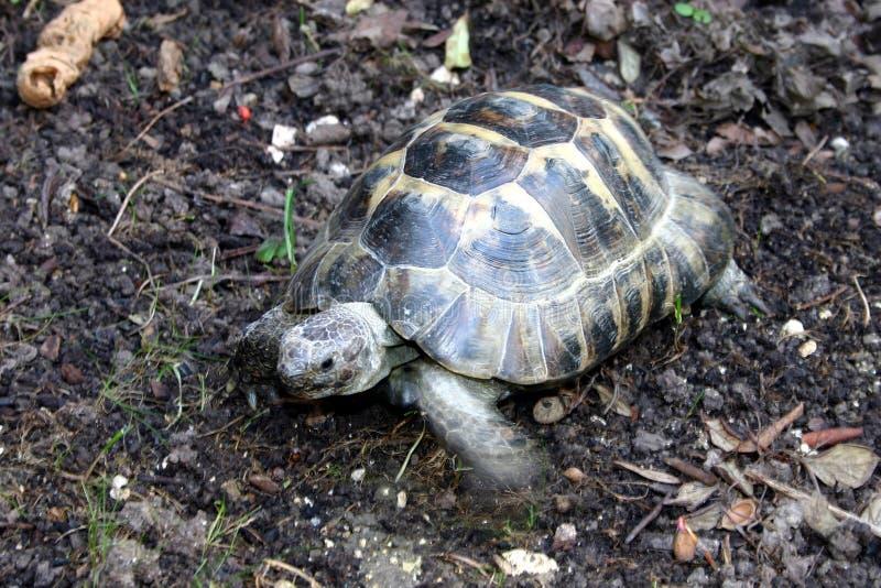 Tortoise στοκ φωτογραφία