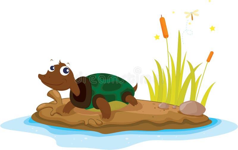 Tortoise royalty free illustration