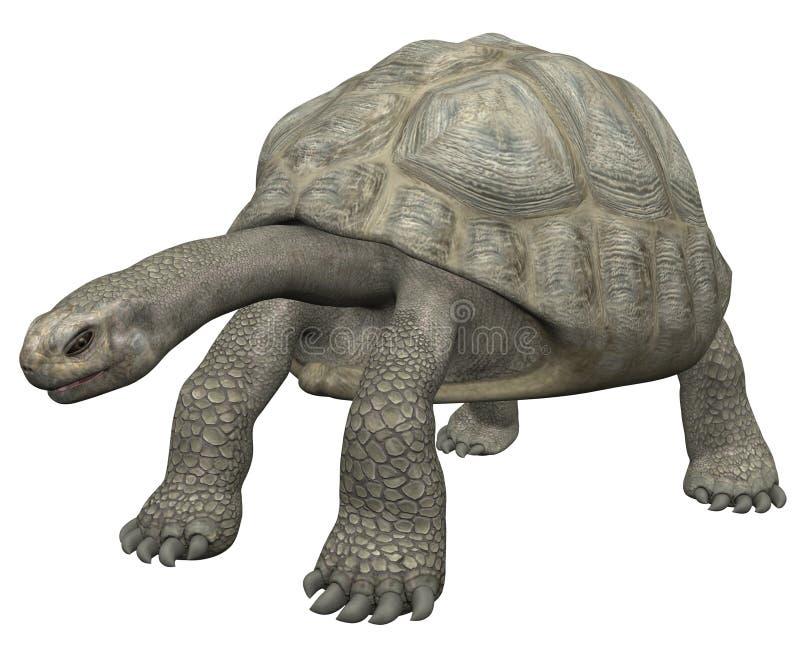 Tortoise illustrazione di stock