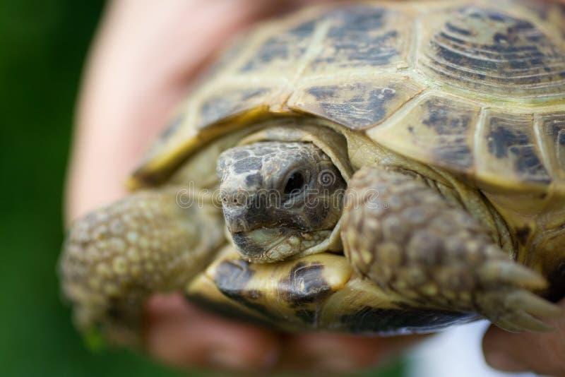 Tortoise. The image of tortoise. Close up stock photo