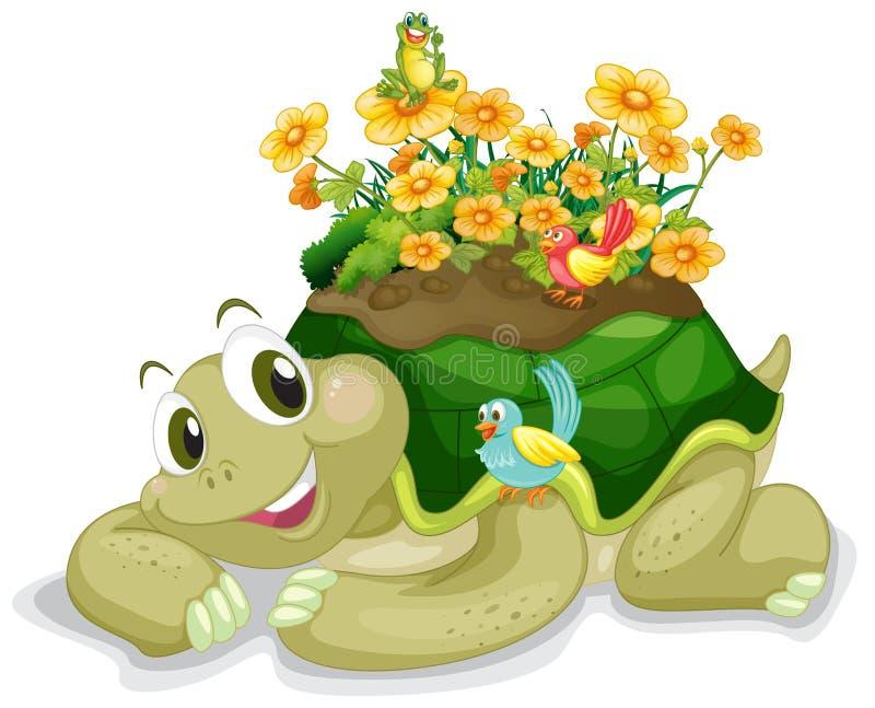 Tortoise stock illustration