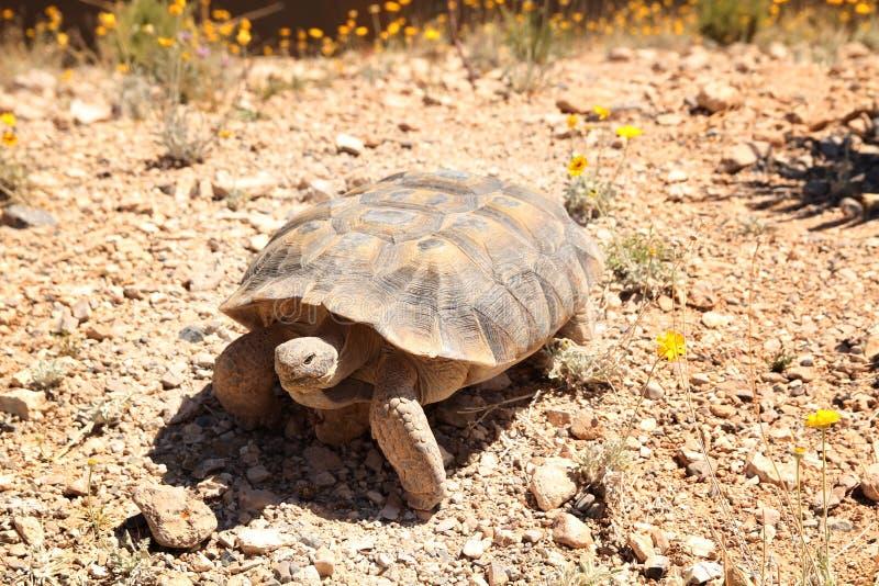 Tortoise Fotografia Royalty Free