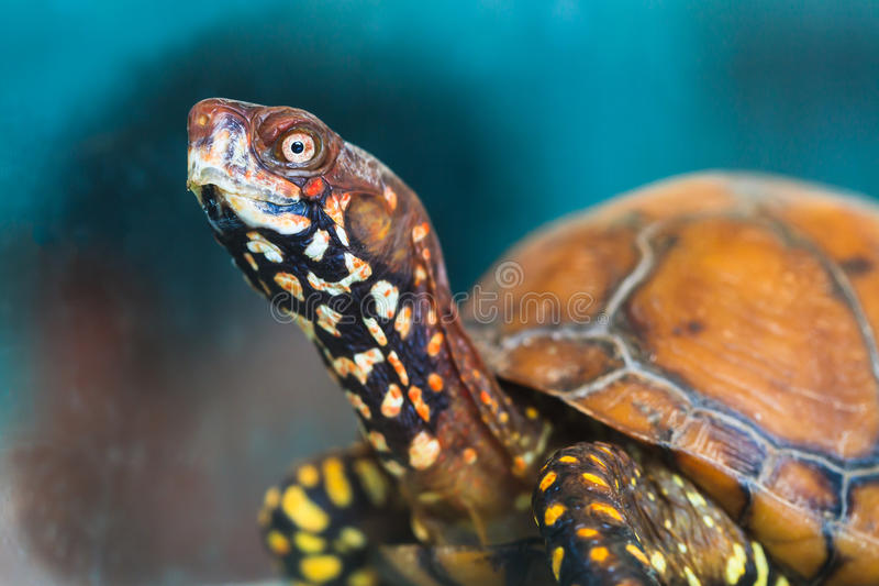 Tortoise_AP Stock Photos