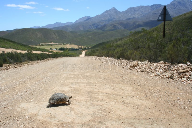 Tortoise Crossing stock images