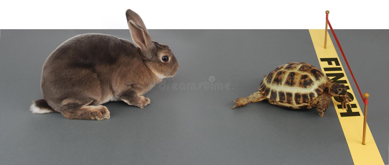 Tortoise-hare royalty free stock photo