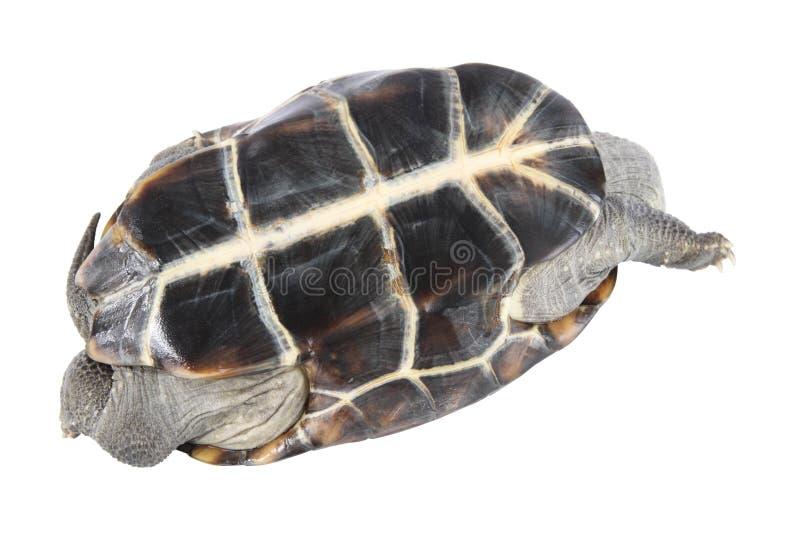 tortoise odwrócony obrazy stock