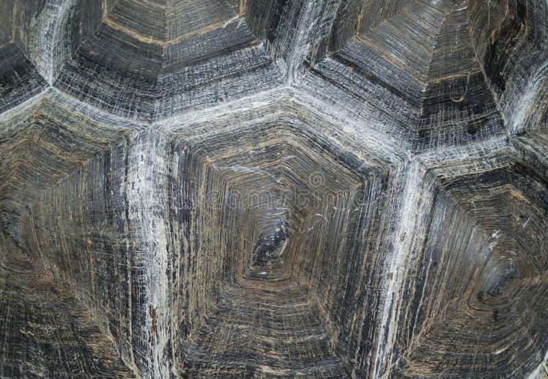 Tortoise shell (background) stock images