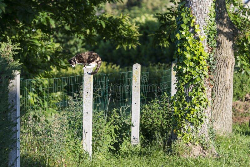 Tortoise-shell kat tussen twee tuinen wordt neergestreken die royalty-vrije stock fotografie