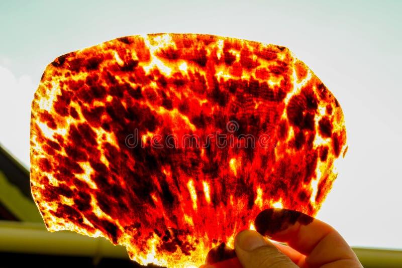 Tortoise shell stock photography