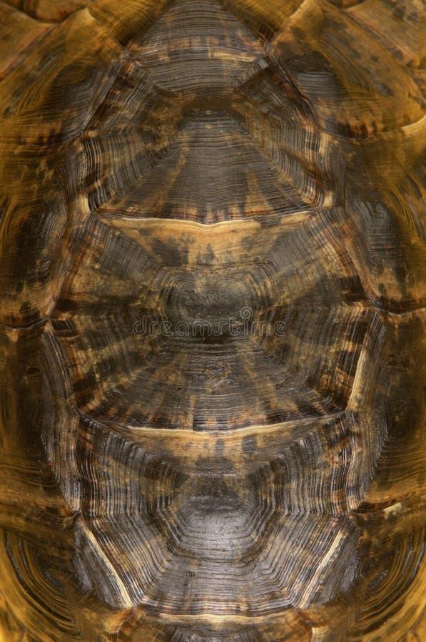 Tortoise Shell Wyszczególnia zdjęcia royalty free