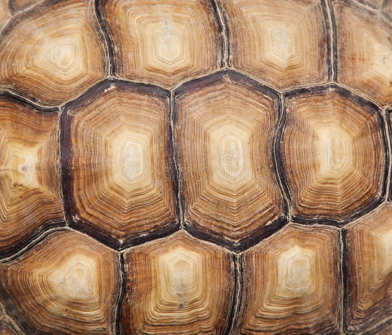 Tortoise skorupa fotografia stock