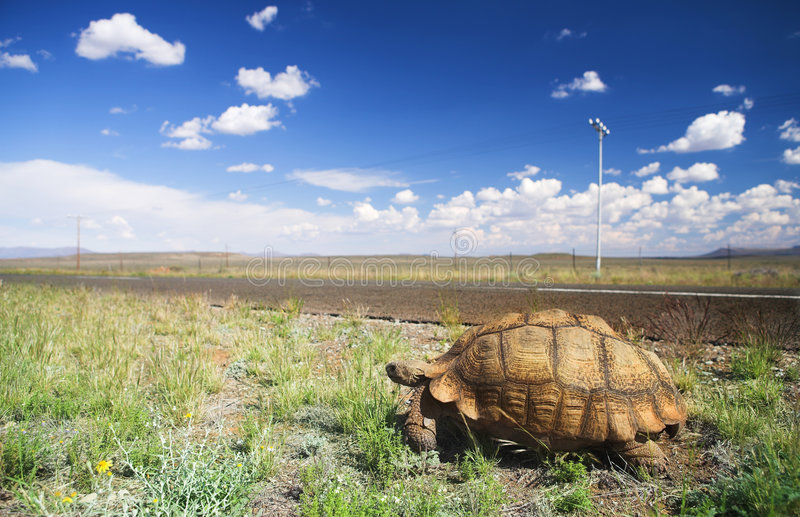 Tortoise su un viaggio fotografia stock libera da diritti