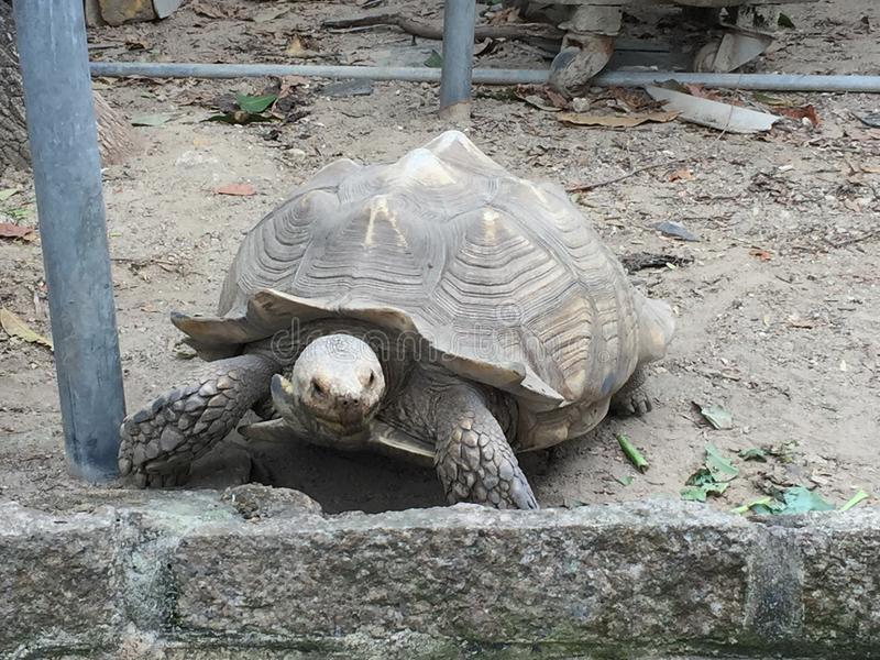 Tortoise royalty free stock images