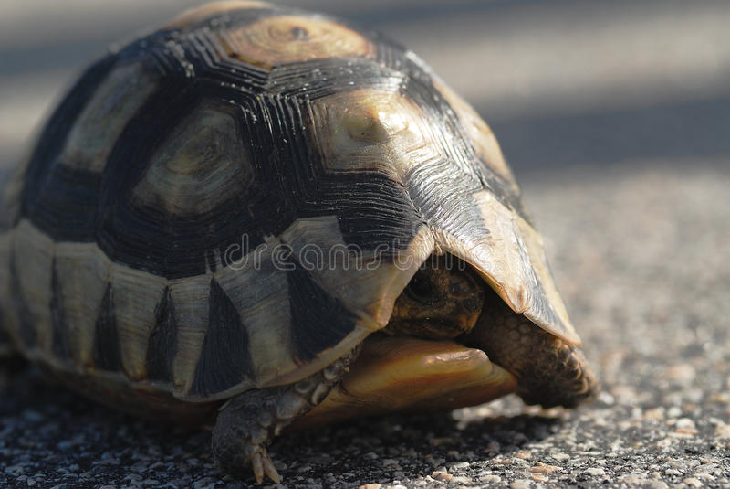 Tortoise Watching Stock Image