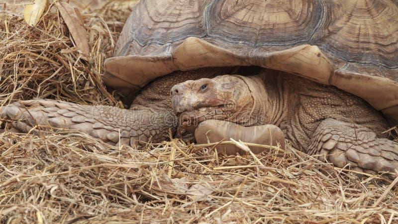 Tortoises in dierentuin royalty-vrije stock afbeelding
