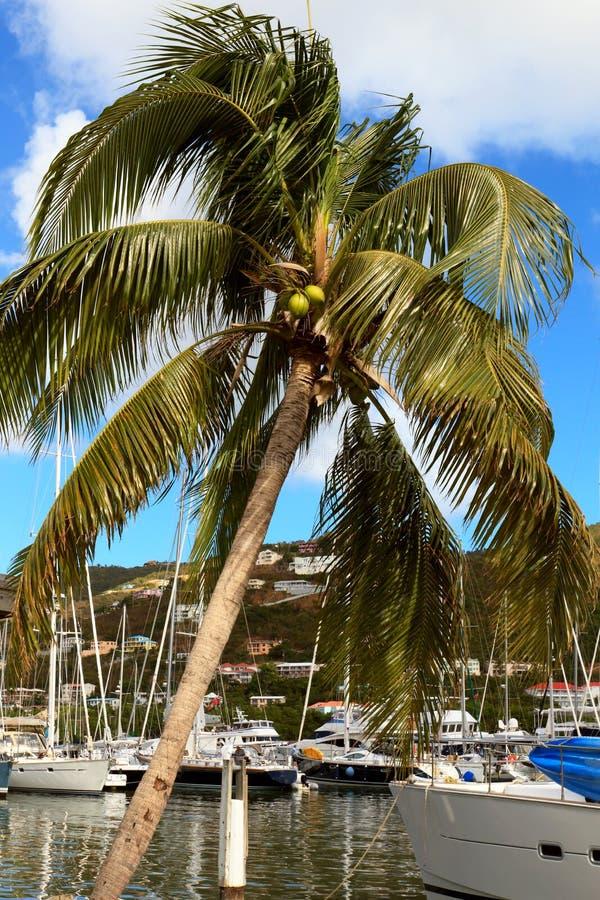 Tortola royalty free stock images