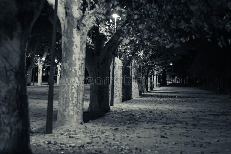 Tortosa, Cataluña, España - línea de árboles en la noche foto de archivo