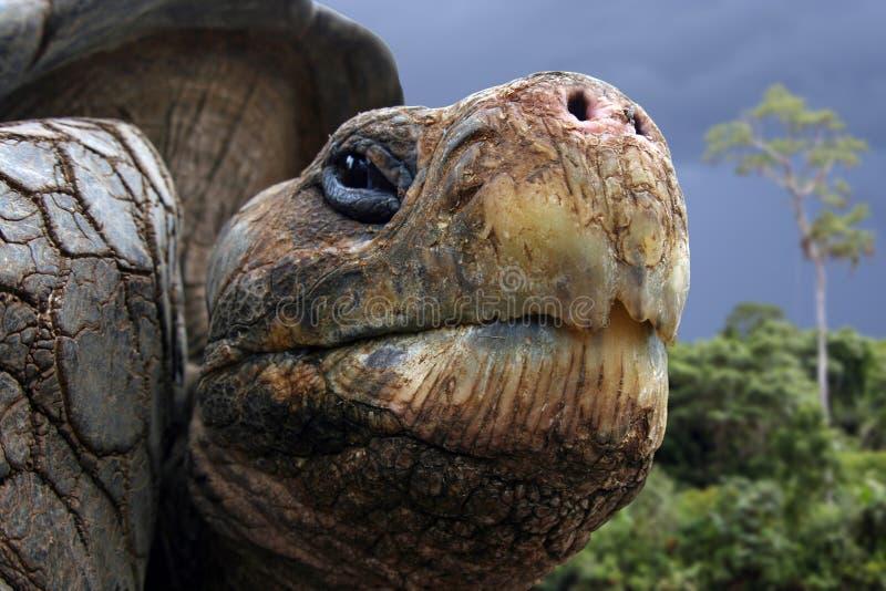Tortue de Galapagos images libres de droits
