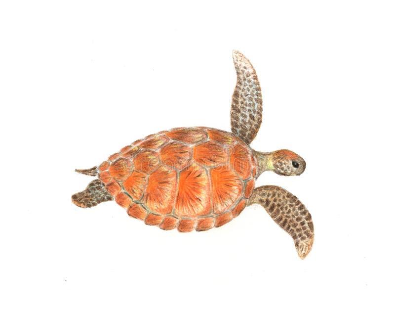 Tortue de mer d'isolement sur l'illustration tirée par la main blanche Dessin coloré de tortue de mer illustration libre de droits