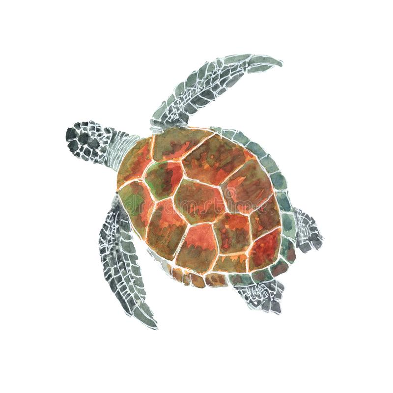 Tortue de mer d'isolement sur le fond blanc Illustrations peintes à la main d'aquarelle de tortue de mer photographie stock libre de droits