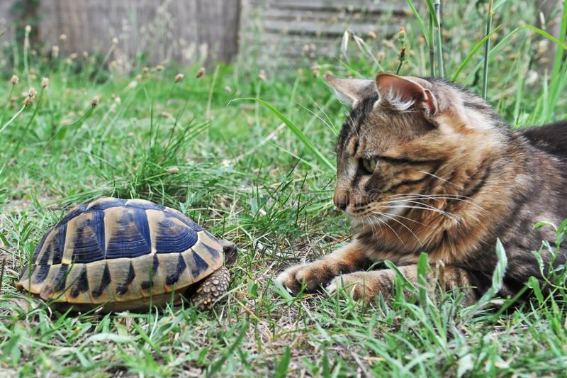 Tortue et chat photographie stock