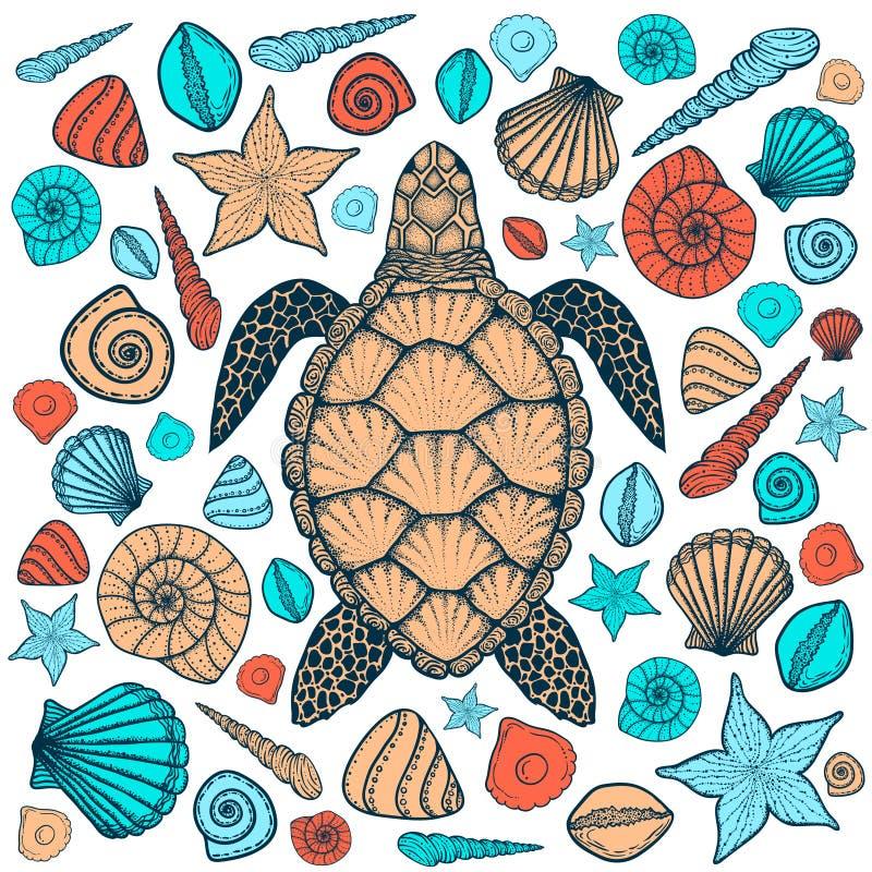Tortue et coquilles de mer dans style de schéma Illustration tirée par la main de vecteur illustration libre de droits
