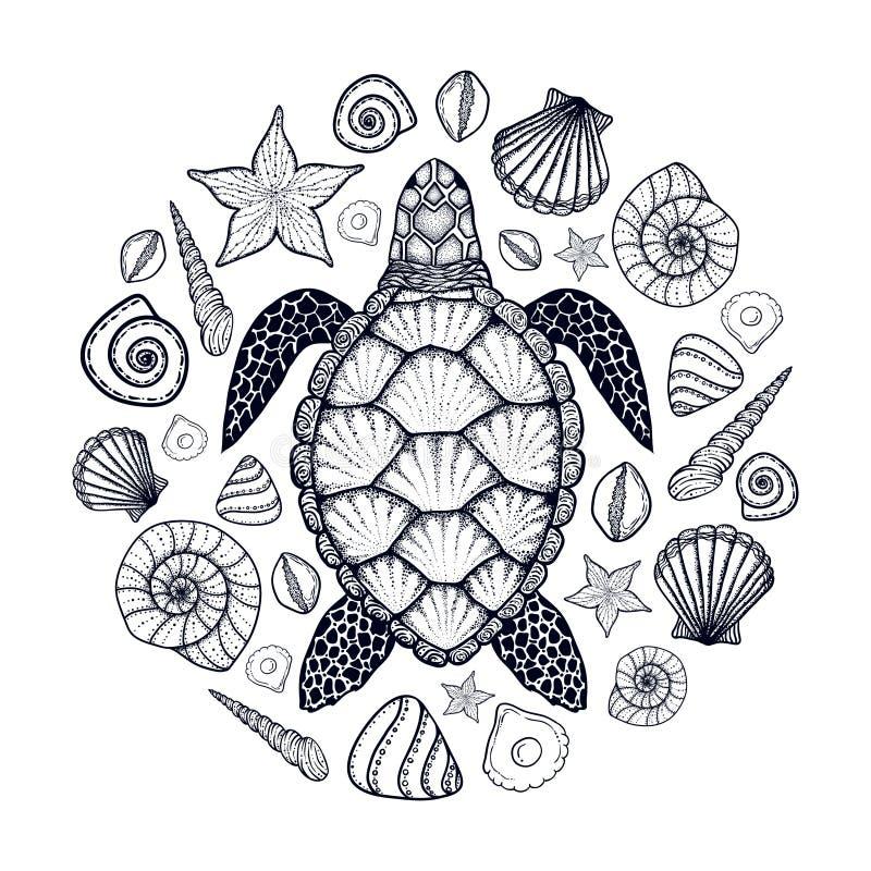 Tortue et coquilles de mer dans style de schéma Illustration tirée par la main de vecteur Ensemble d'éléments d'océan illustration stock