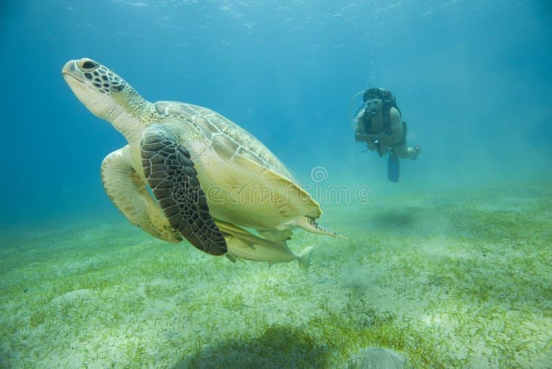Tortue et plongeur autonome images stock