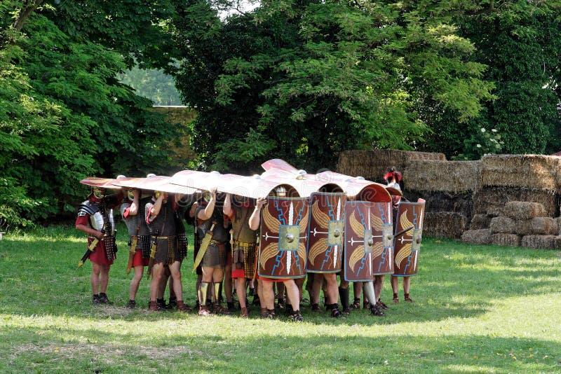 Tortue romaine photo libre de droits