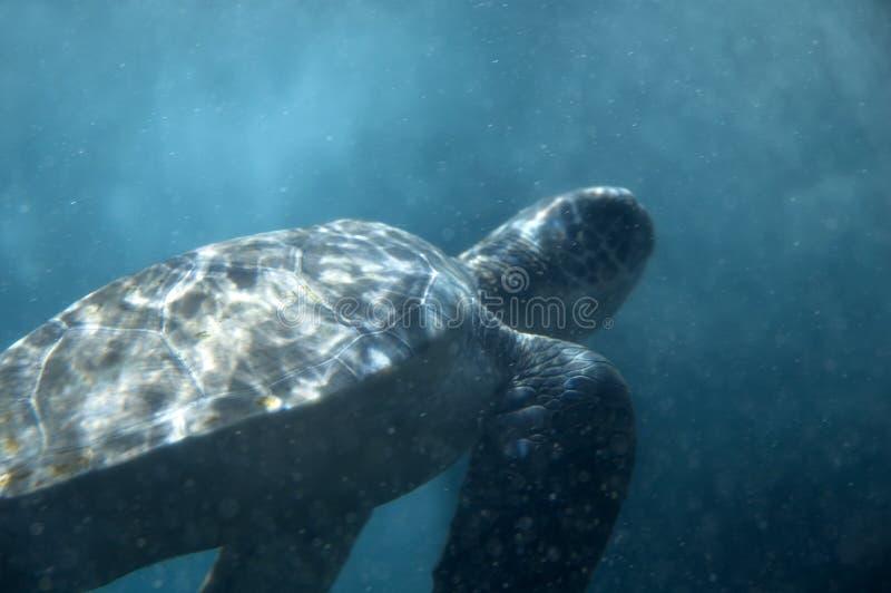Tortue sous-marine photo stock
