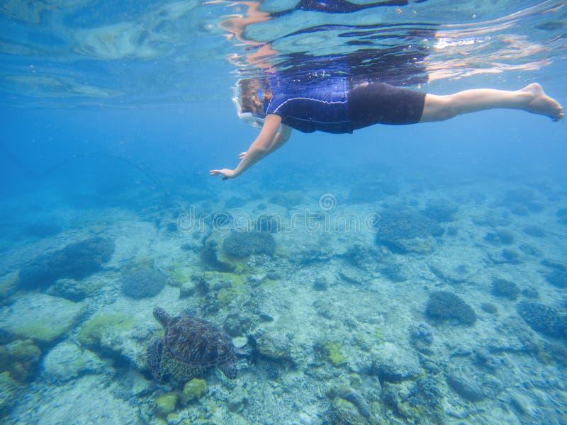 Tortue verte avec la femme de natation dans le plein masque protecteur et l'usage naviguant au schnorchel photographie stock libre de droits