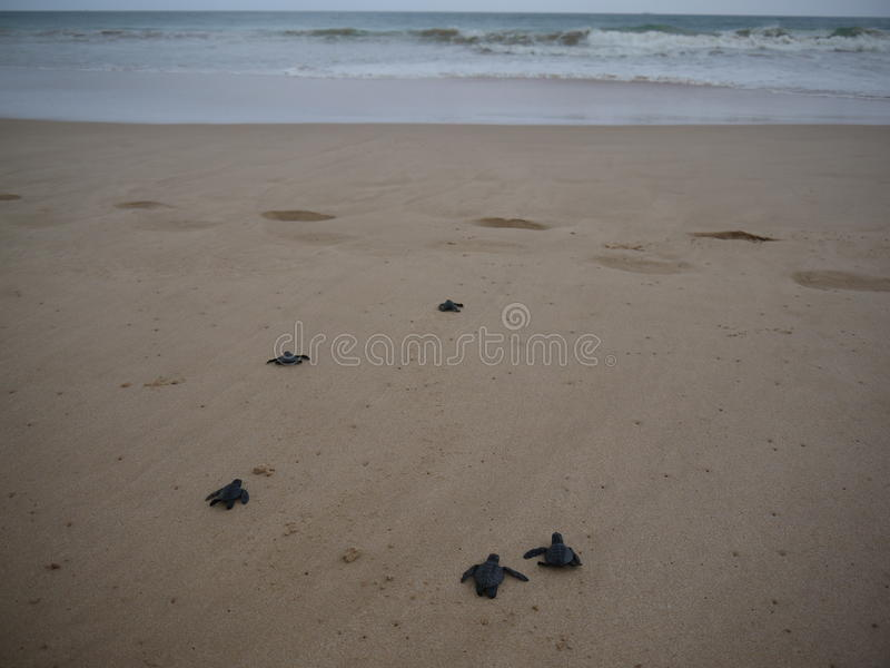 tortues photo stock