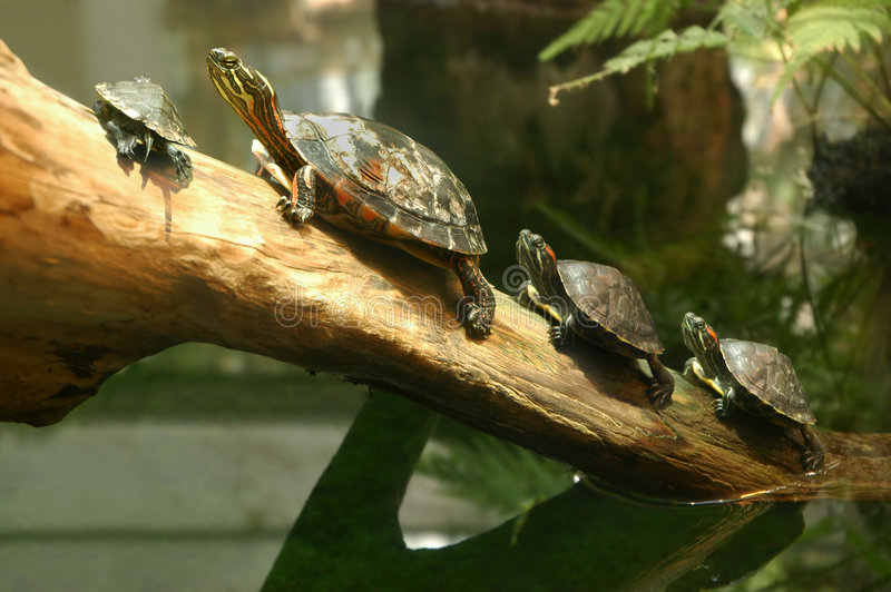 tortues photographie stock