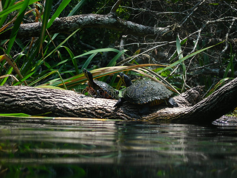 Tortues photos stock