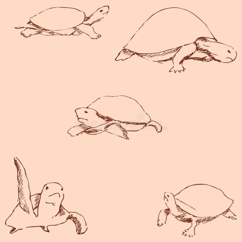 tortues Croquis de crayon à la main Couleurs de vintage Vecteur illustration de vecteur