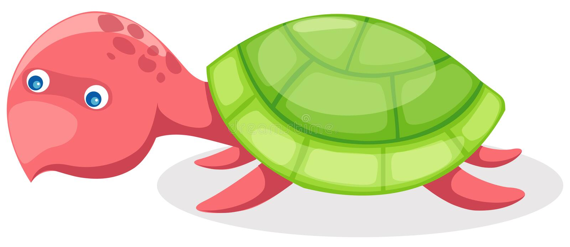 tortuga ilustración del vector