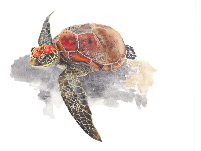 Tortuga de mar aislada en el fondo blanco Ejemplo pintado a mano de la acuarela de la tortuga de mar libre illustration