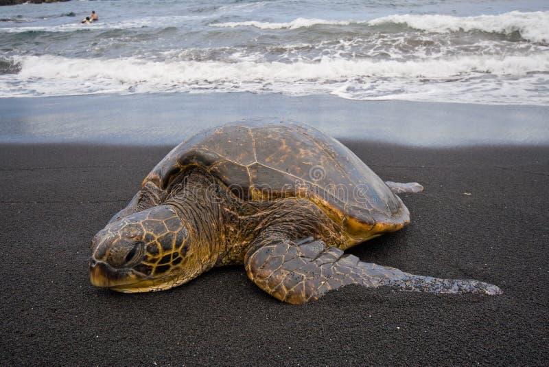 Tortuga de mar en la playa imagenes de archivo