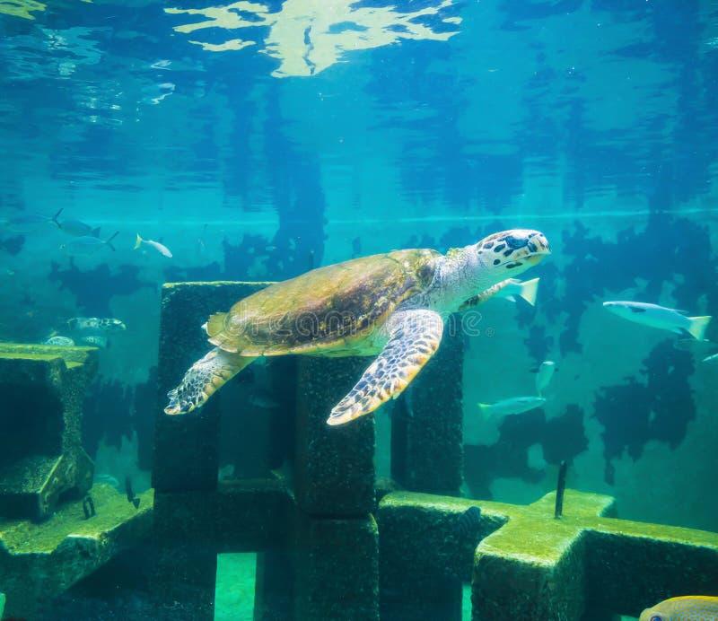 Tortuga de mar en mundo subacuático imagen de archivo libre de regalías