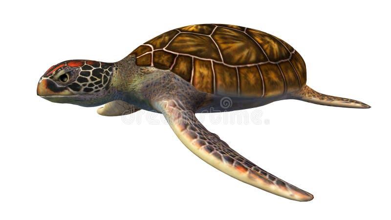 Tortuga de mar verde aislada en el fondo blanco ilustración del vector