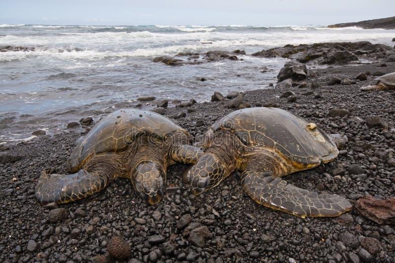 Tortuga de mar verde en la playa foto de archivo