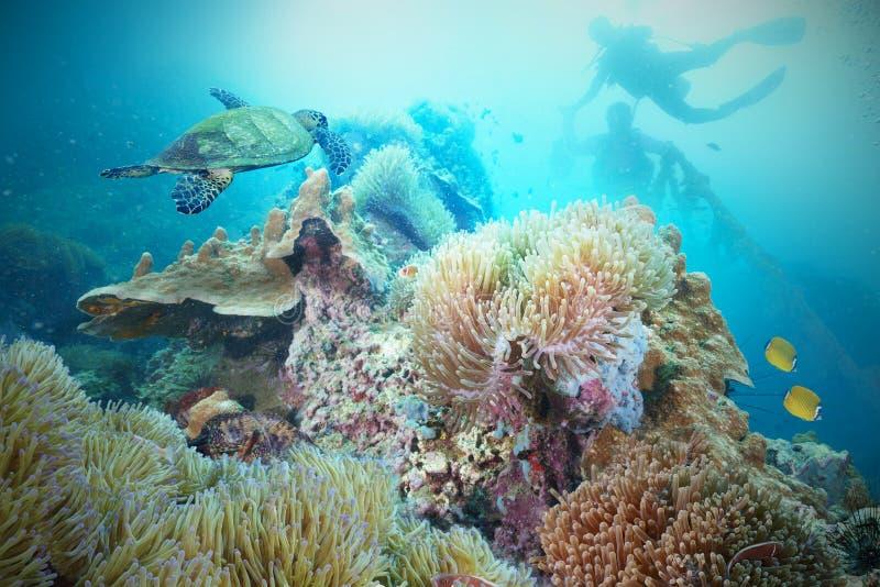 Tortuga de mar y zambullidor de equipo de submarinismo imagen de archivo
