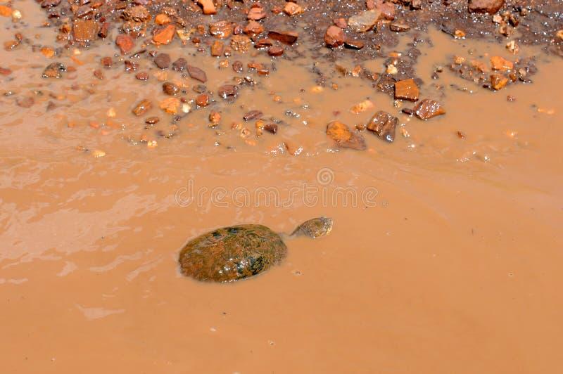 Tortuga en el parque nacional de Tanzania imagen de archivo