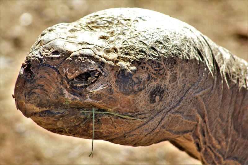 Tortuga en el parque zoológico de Phoenix, centro para la protección de naturaleza, Phoenix, Arizona, Estados Unidos de las Islas imagen de archivo libre de regalías