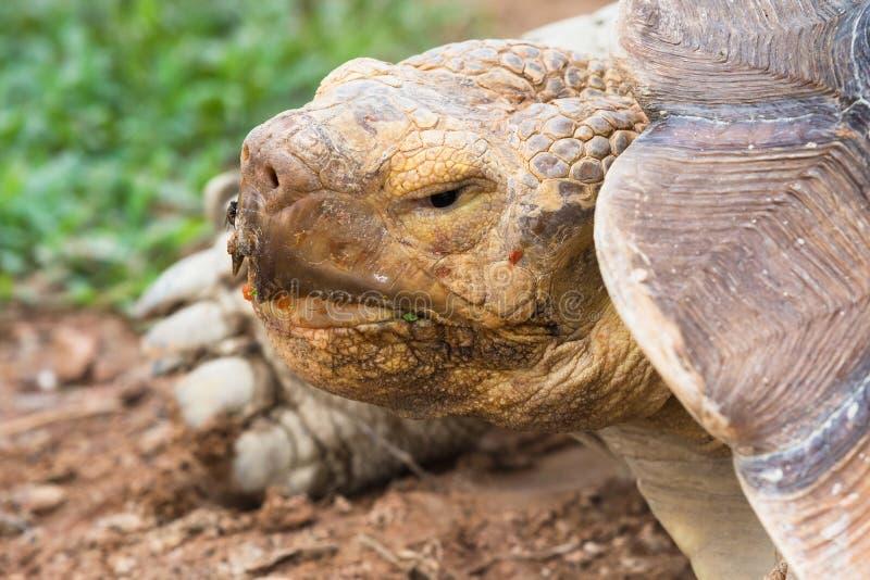 Tortuga gigante en el parque zoológico tailandia imagen de archivo
