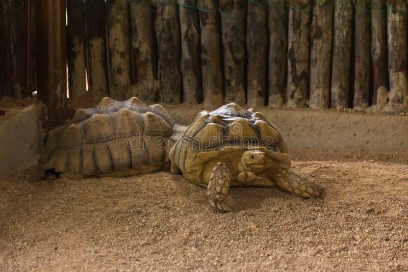 Tortuga gigante, zoológico malacca, Malasia fotografía de archivo libre de regalías