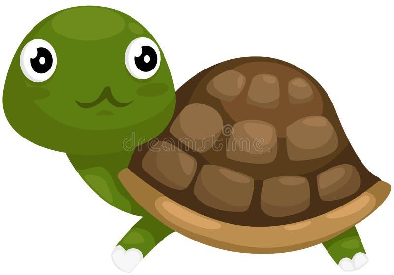 Tortuga linda stock de ilustración