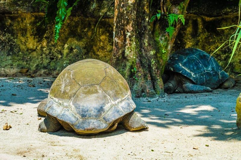 Tortuga que se relaja en la playa fotos de archivo libres de regalías